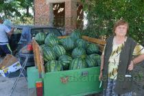 Вносните дини подбиха  цените на българските