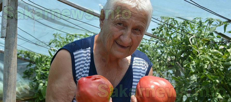 Гигантски розови домати зреят  в градината на баба Тянка