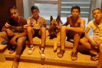 Деца от ромска махала върнаха куче на собственика му