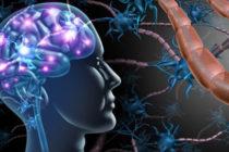 Множествената склероза засяга най-вече младите жени
