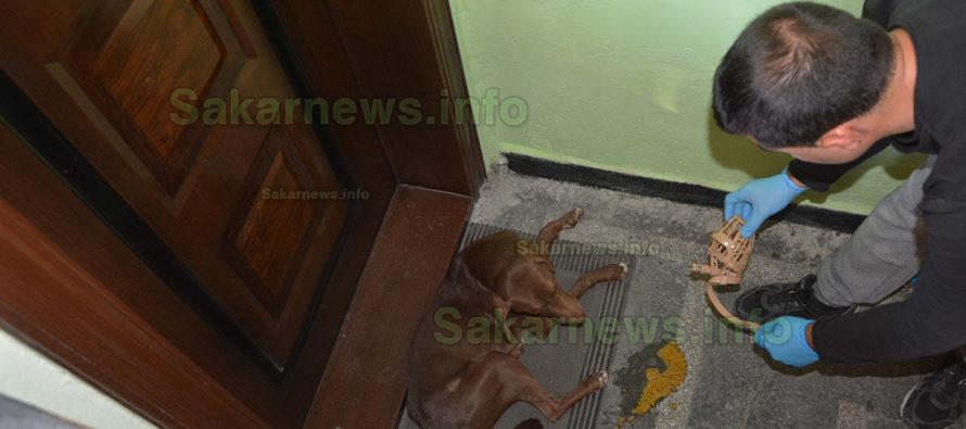 Зоодоброволци от Харманли спасиха поредното куче