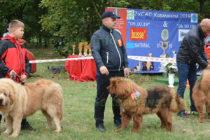 Над 70 кучета от цялата страна  получиха сертификати от изложба