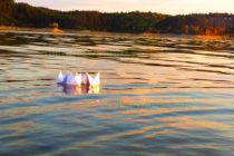 """""""Корабчета от хартия""""  във водата са печелившите"""