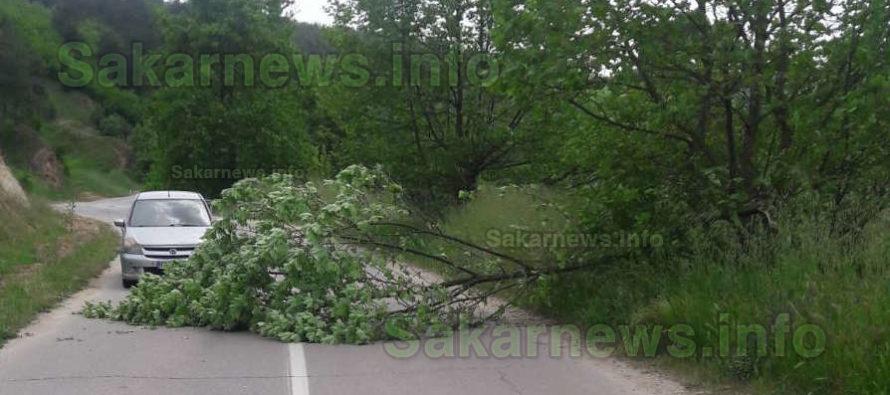 Полуотсечено дърво се строполи на капака на минаваща кола