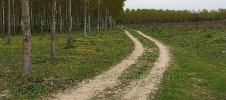 Край Симеоновград ще ремонтират горски пътища за близо 3 млн. лв.