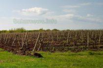 Европейската комисия приема нови извънредни мерки в подкрепа на лозаро-винарския сектор