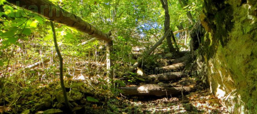 ВЛюбимец реконструират водоеми, изграждат  горски пътища