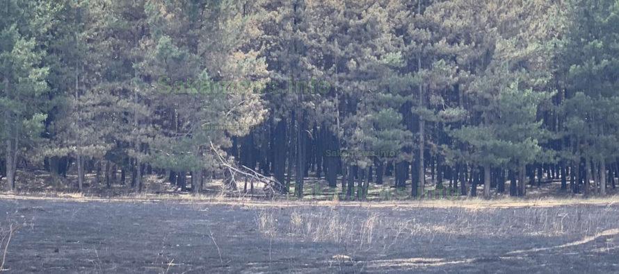 Два пожара за един ден горяха в Тополовградско