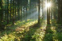 Търговец на дърва настоява за по-малко защитени гори