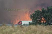 Огънят край Харманли погълна стотици декари борова гора