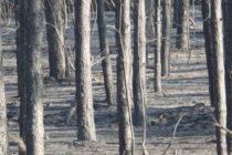 Ситуацията с пожарите в Хасковско е овладяна, отчете пожарникар №1