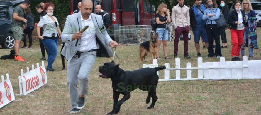Световен шампион бе избран за най-красивото куче на киноложка изложба