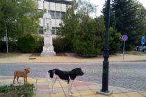 Намериха решение на проблема със скитащите кучета в Тополовград