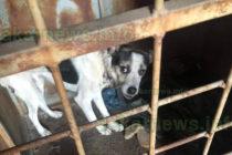 Бездомни кучета и голям бюджет разпалиха страсти във ФБ
