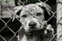 Благотворителна вечер ще подкрепи бездомни животни