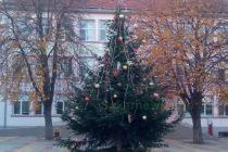 Елха краси центъра на Тополовград