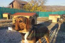 Кучета ще зимуват в къщички от дарители