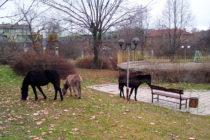 След кучетата, магарета и коне станаха посетители на Градския парк