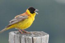 Хората, слушащи птичи песни са по-щастливи