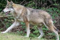 От МОСВ обявиха защитени зони в Сакар планина и Родопите