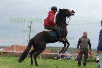 Елитни коне мерят издръжливост край село Коларово