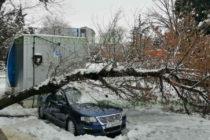 Тежкият сняг счупи клони, събори дървета, прекъсна кабели