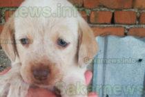 Мими е поредното куче за осиновяване