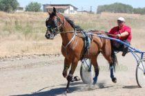 Коне се надпреварват в юлската жега до Марица