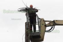 Нов дом за щъркели предлага Иван Желязков