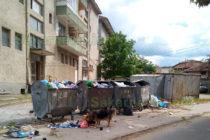 Кучета и котки разпръскват безразборно боклуци от контейнерите