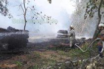 Горяха подредени за извозване дърва