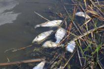 "Язовир ""Ивайловград"" пресъхва, измира риба"